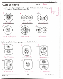 biology if8765 instructional fair inc page 28